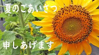 夏のごあいさつ